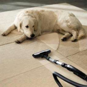 Total Carpet Cleaning Upholstery Cleaning Service Water Dama